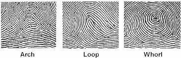 The three main types of fingerprint