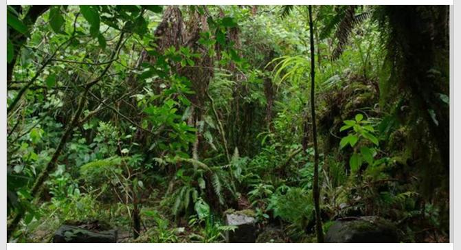 Central American jungle
