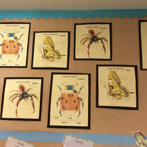 We labelled minibeasts