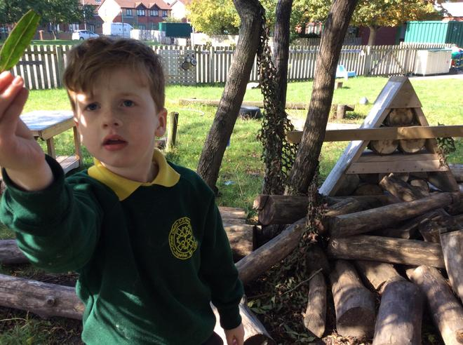 Finding leaves