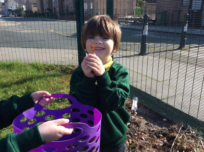 Finding conkers