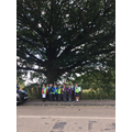 Physical Geography! How old is this tree?