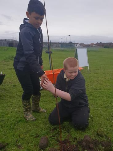 Tree planting around the edge of the field