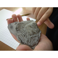 Exploring fossils in Science