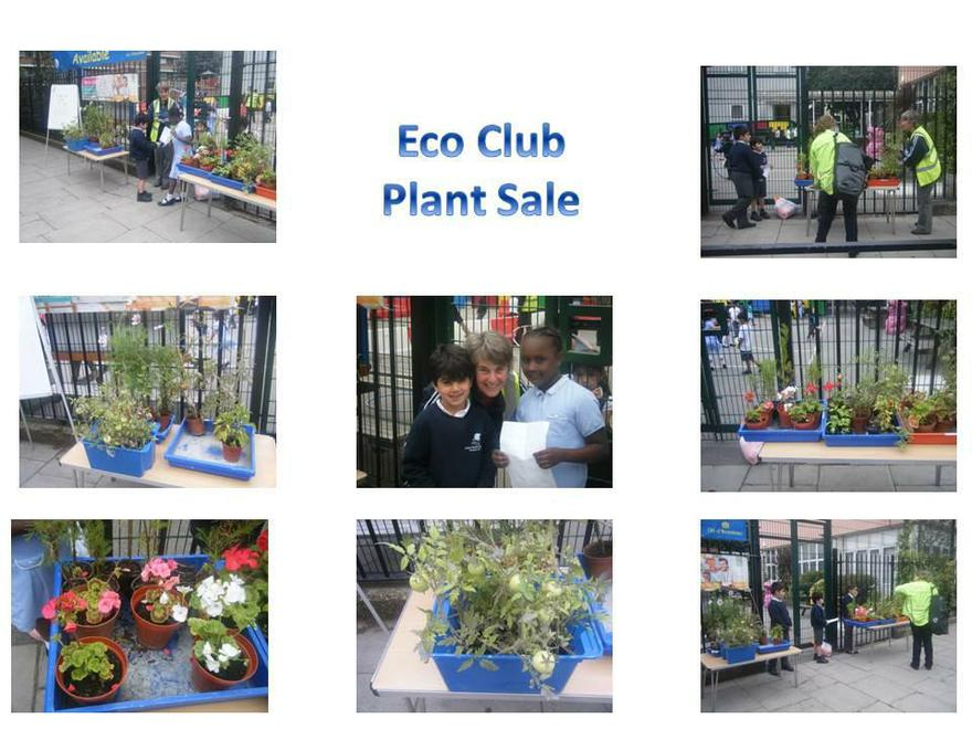 Growing and selling plants