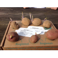 The potatoes have been 'chitting'