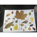 A beautiful Autumn picture made with leaves by Maylee-Rose