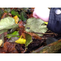 Exploring microhabitats on the hunt for minibeasts