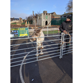 Festive surprise - meet the reindeer