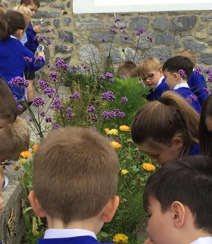 Exploring plants as part of our science.