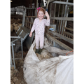 Ellen helping to shear sheep.jpg
