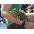 Exotic Zoo visit with their reptiles.