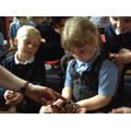 Children touch and hold a Spider.