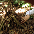 Using sticks to build a den.