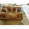 Day 1 - Chitting Potatoes