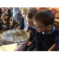 Smelling the daub mixture for the walls.