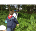 Class 2 hike into the woods.