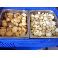 The finished potatoes cooked for eating in school