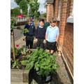 Group of Children looking after the potatoes.