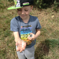 Year 2 child finds a bug.