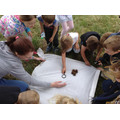 Class 1 shake a tree to look for bugs.