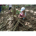 A child collects sticks for a den.