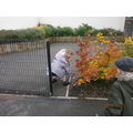 We looked for signs of Autumn in the playground