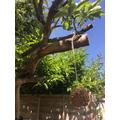 Home-made Bird Feeder (Instructions below)