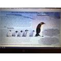 Penguin Adaptations Poster NPo