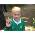 Finding something spiky like a stegosaurus