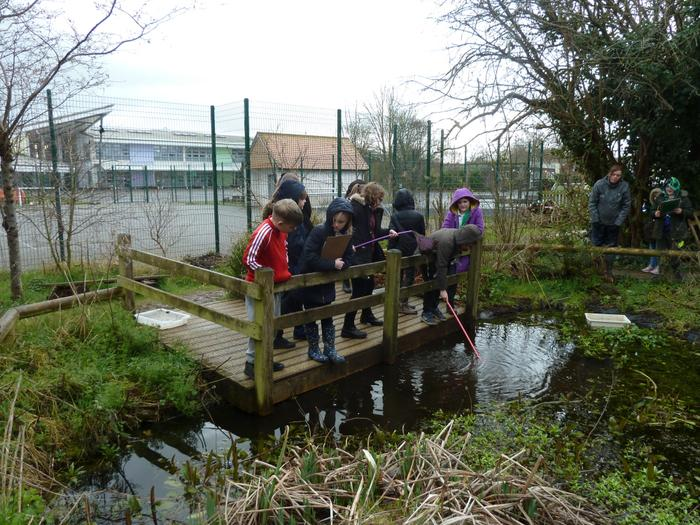 Pond dipping fun!