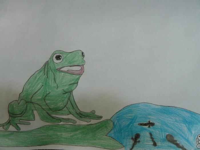 From tadpole to frog.