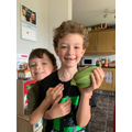 A truly magnificent home grown courgette!!