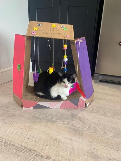 Libby looks very happy in her new den! Very creative Molly!