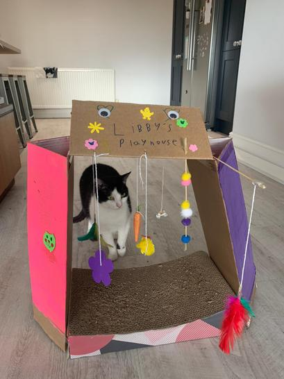 Molly has made a beautiful play den for her cat Libby!