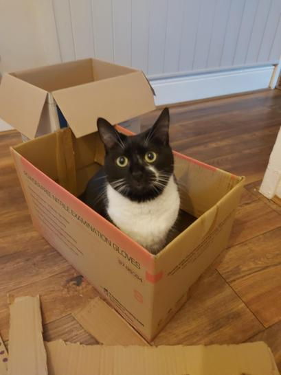 When your cat sits in the box you need, you have to improvise...