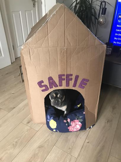 Charlie has made a beautiful house for his gorgeous dog Saffie!