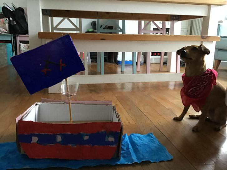 Shiver me timbers! Alice has made a wonderful pirate ship for her dog Captain Angus!