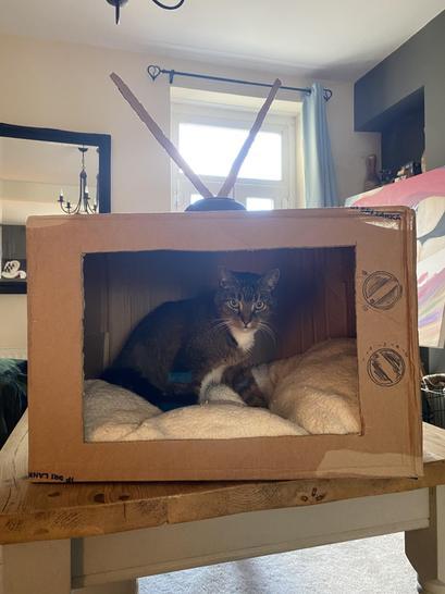 Seth's cat looks happy on the big screen! So creative Seth!