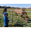 Freddie spotted a horse on his walk.