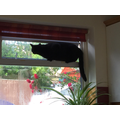 Why do I need a cat flap!!