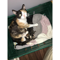 Ruby's cat has ahd kittens in the Easter Holidays