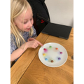 Alice doing the skittles experiment.