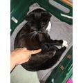 Ruby's cat