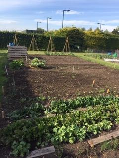 The new allotment - lots of digging!