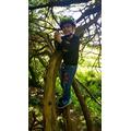 Matty climbing trees!