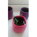 Ruben has been growing some lovely little seeds!