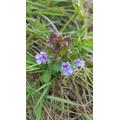 wild flowers - Alfie  B