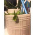 Ruben has a handy plant that eats spiders!!!!