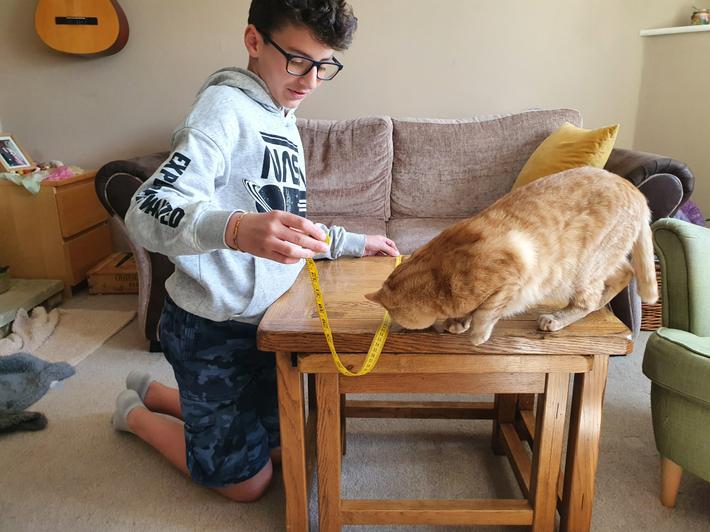 Kaya's cat likes to be involved!